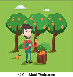 Farmer collecting oranges vector illustration. - A happy...