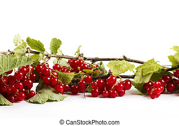 redcurrant with leafes on white background
