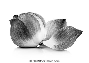 lotus petal black and white