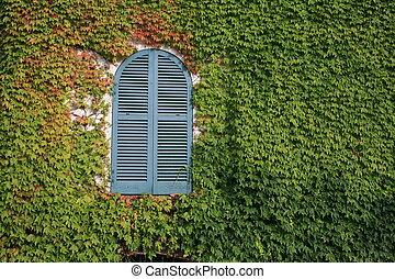 Window in Green - A lovely window in 12th arrondisement\\\'s...