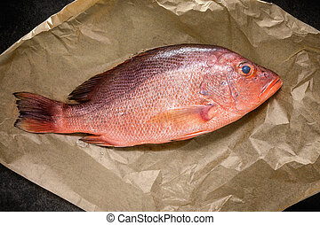 Single Raw Red snapper fish on backing paper, top view
