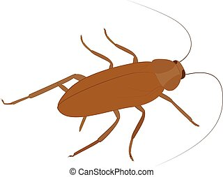 Cockroach vector icon cartoon insect isolated on white -...