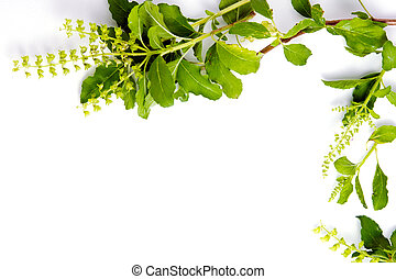 Basil leaf border on white background for decorative graphic...