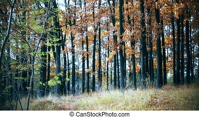 Colorful forest during transition from summer to autumn