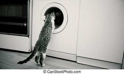 Young cat looking into washing machine drum - Young cat...
