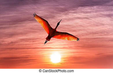 Tropical bird against beautiful orange sky panoramic view -...