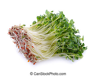 kaiware sprout, japanese vegetable or watercress on white...