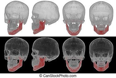 3d rendered illustration of jaw bone