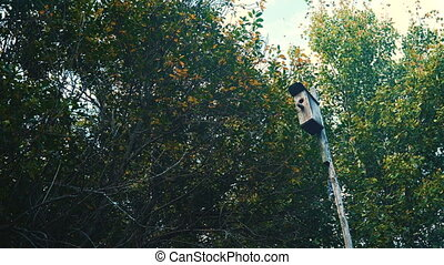 Bird house in the woods - Birdhouse on a long pole in the...