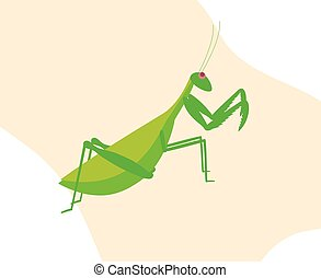 Mantid Insect Vector Illustration