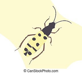 Spotted Totengraber Insect Vector Illustration