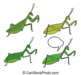 Mantid Insects Vector Illustration