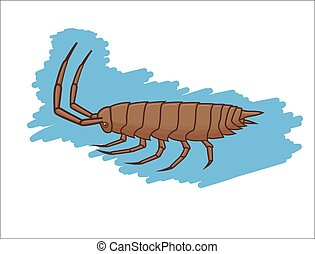 Wild Woodlouse Insect Vector Illustration