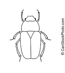 Drawing Art of Beetle Insect Vector Illustration