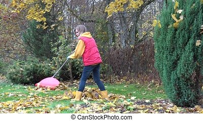 Young country woman girl raking leaves under maple tree in...