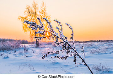 winter plant hoarfrost - The plant on a meadow is covered by...