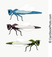 Dragonfly Insects Vector Illustration