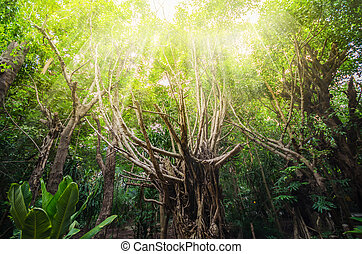 Tree in the forest with a warm light