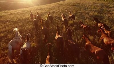 Horses are galloping. Aerial view of moving horses. We are...