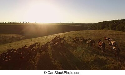 View of horses from air. Bright sun in the sky. Rider...