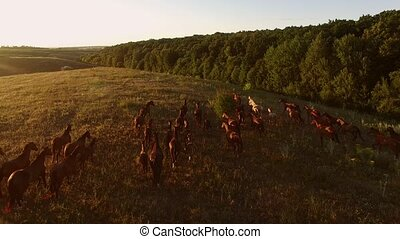 Horse herd is galloping. Flock of horses near forest. Follow...