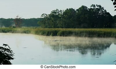 fog and forest and lake reflection - fog and steam over the...