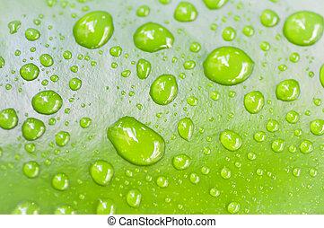 dew drop on green leaf - dew drop on lotus leaf