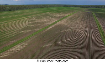 aerial view of Fertile Agricultural Field - aerial view of...