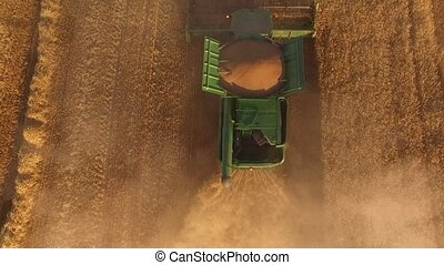 Top view of moving harvester. Yellow straw and dust. Wheat...