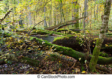 Autumn forest landscape with broken trees strictly nature...
