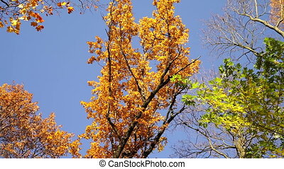 Seasonal changing colors of leaves.