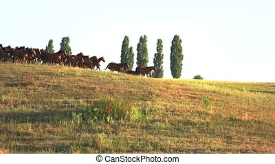 Horses run on grassy meadow. Animals and clear sky. Fast...
