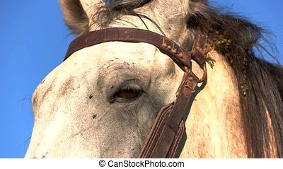Head of white horse. Animal with a mane. Wild look of...