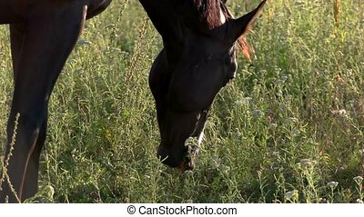 Horse is chewing grass. Hoofed animal on the meadow....
