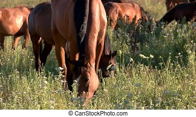 Horses eating grass.