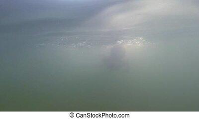 Small boy underwater