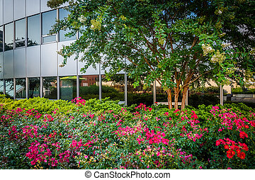 Garden at Freedom Park and modern building in Rosslyn,...