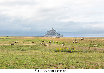 Mont Saint Michel from the countryside with sheep