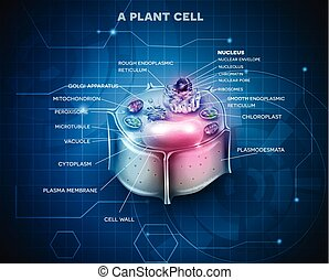 Plant Cell anatomy scientific background