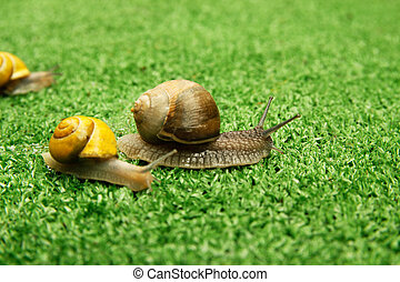 snail crawling on the grass