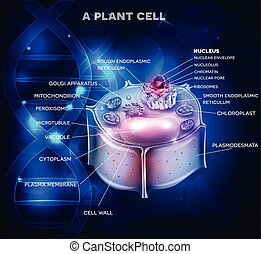 Plant Cell structure and DNA chain at the background