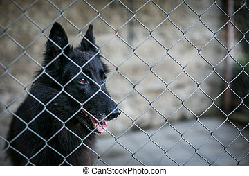 Shelter for homeless dogs - dog behind in a cage waiting for...