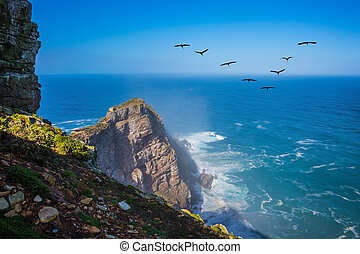 Flock of migratory birds at sunset - The powerful ocean surf...
