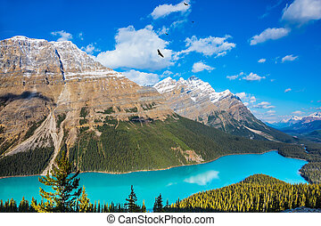 "Mountain Lake as a ""wolf head"" - Turquoise Lake Peyto in..."
