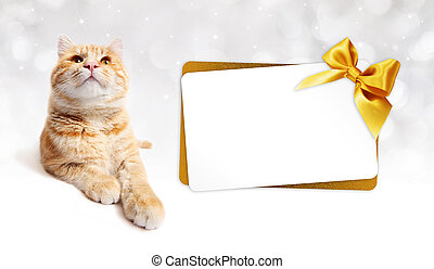 ginger cat and gift card with golden ribbon bow Isolated on...
