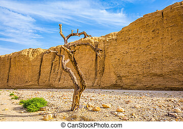 The walking route on picturesque Black canyon - The stone...