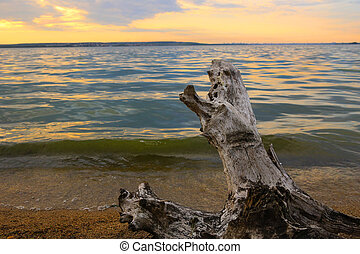 coastline of  lake with snag against background of sunset