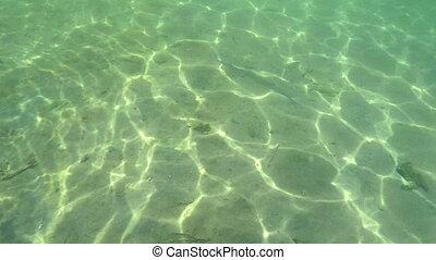 chasing a Barracuda underwater - Florida Keys underwater...
