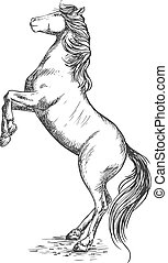 White horse rearing on hind hoof sketch portrait