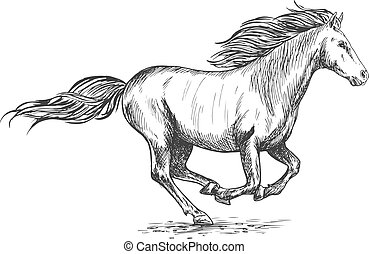 Running gallop white horse sketch portrait. Vector mustang...